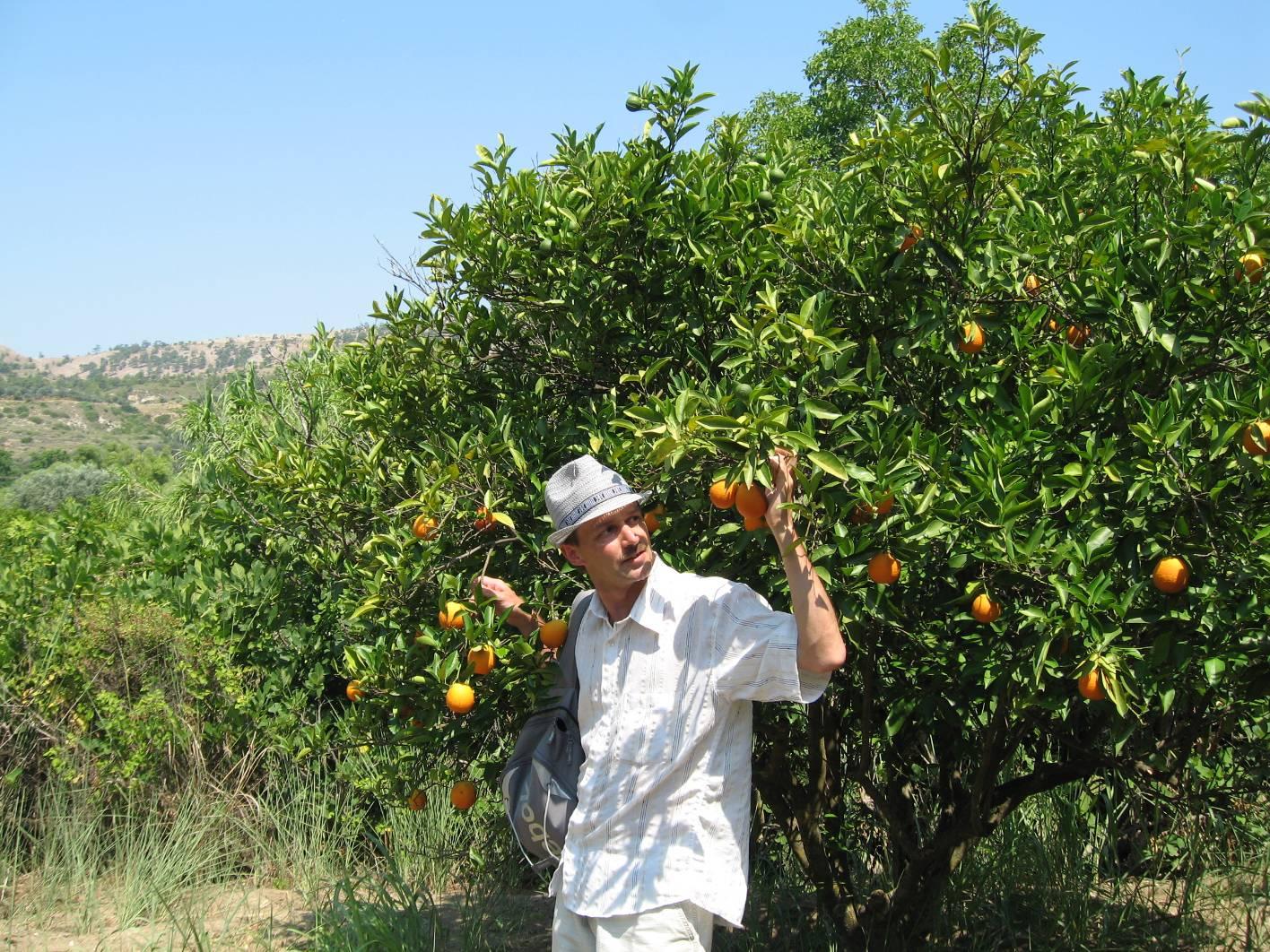 Родос апельсины